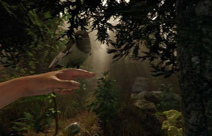 سی دی کی اورجینال The Forest